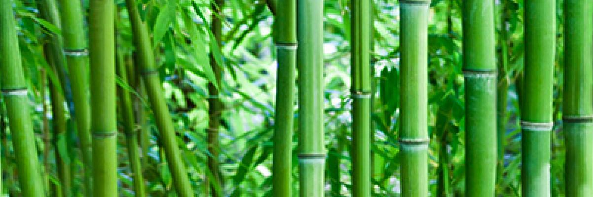 Bamboo glass inserto 25x75